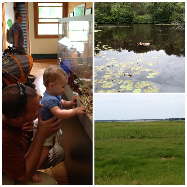 The Wellfleet Audubon. Fresh and salt water habitats with hands on activities.